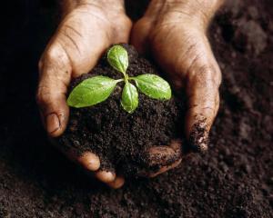 baby_plant.28104733